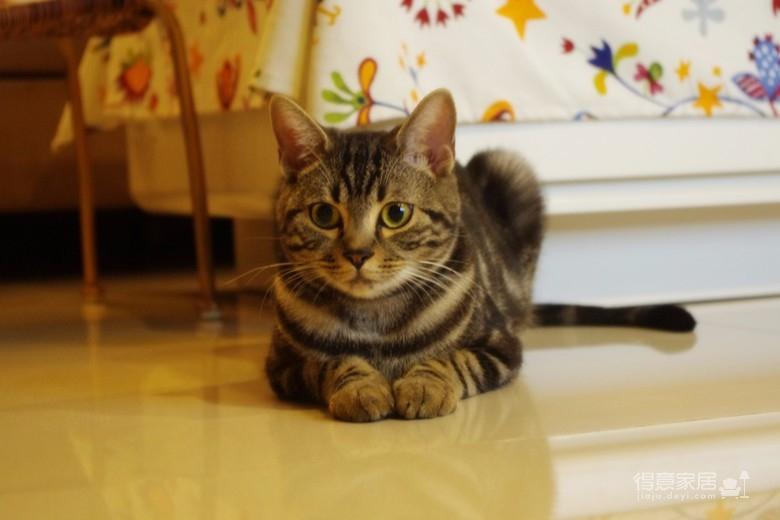 83㎡小猫窝