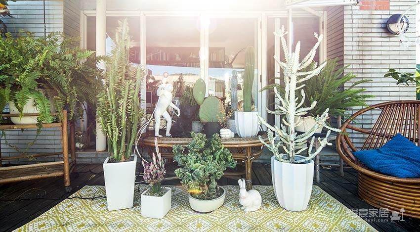 植物就是最好的装饰品!顶楼老公寓的秘密花园!图_11