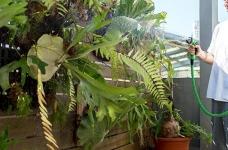 植物就是最好的装饰品!顶楼老公寓的秘密花园!图_19