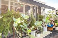 植物就是最好的装饰品!顶楼老公寓的秘密花园!图_15