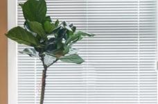 80平文艺北欧风装修,整屋风格风格偏简洁,暖灯,粉墙,再加上点绿意,超级温馨图_4